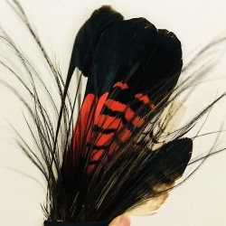 #3 Akubra Australian Native Feathers