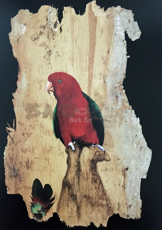 KING PARROT- Postcard Size - Signed by Artist