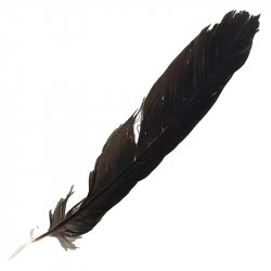 #9 Raven Tail Feather