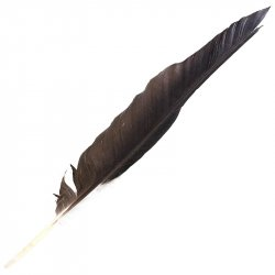 #31 Raven Fight Wing Feather