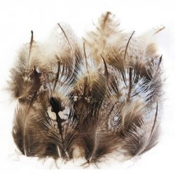 Tawney Frogmouth Plumage Feathers