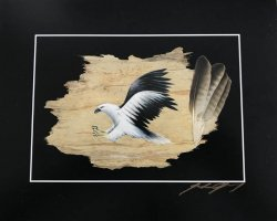 White Bellied Sea Eagle Print