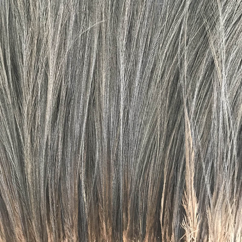 "Cassowary Feathers (20) 8""-12"" Mixed"