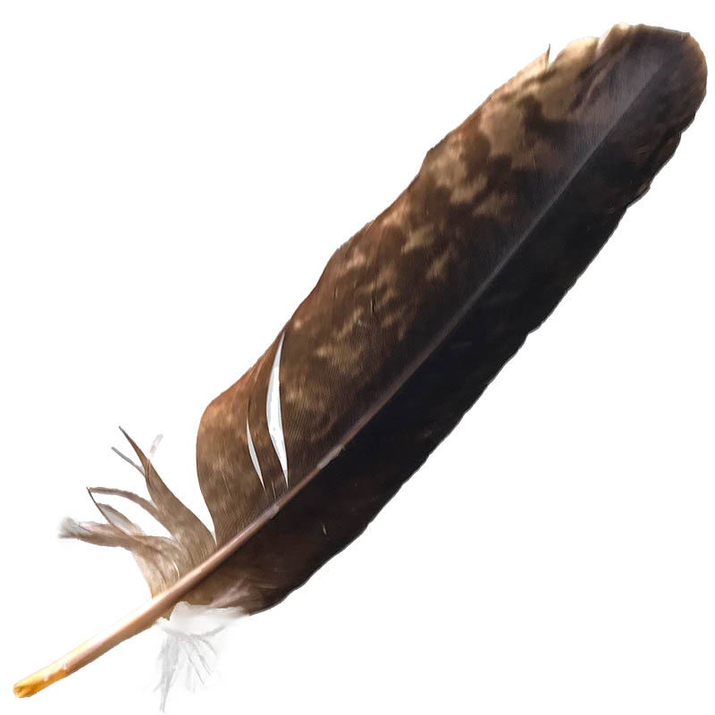 #13 Wedged Tailed Eagle Primary Wing Feather