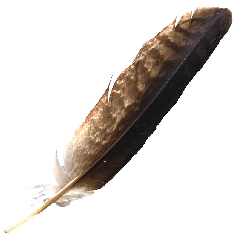 #17 Wedged Tailed Eagle Primary Wing Feather