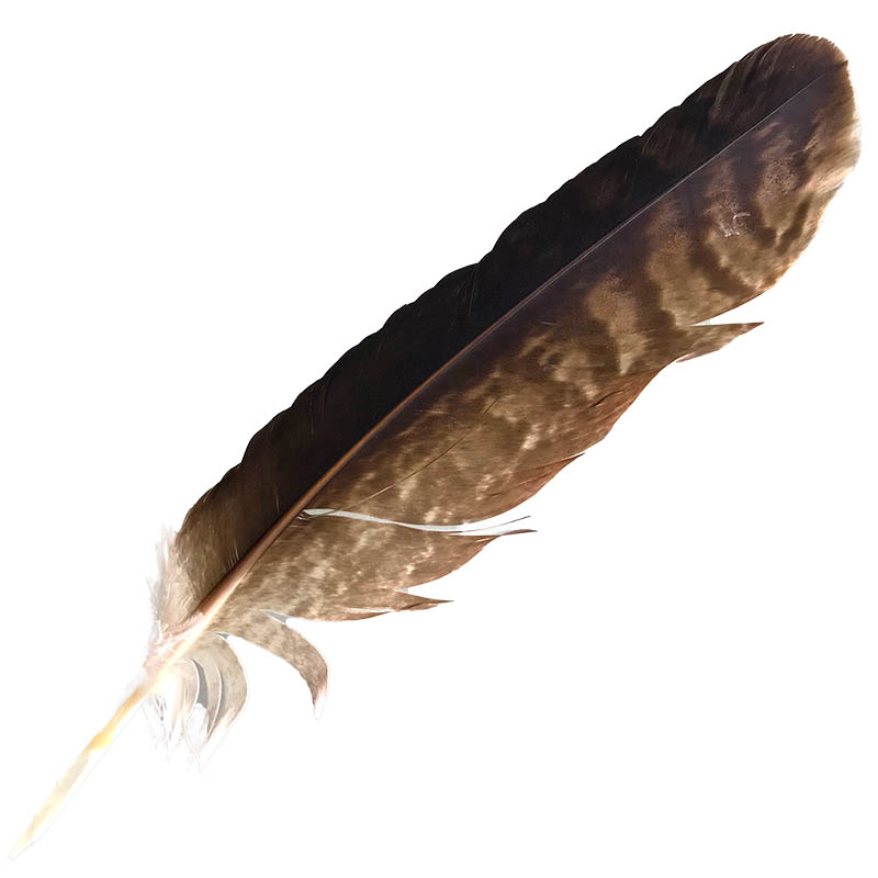 #9 Wedged Tailed Eagle Primary Wing Feather