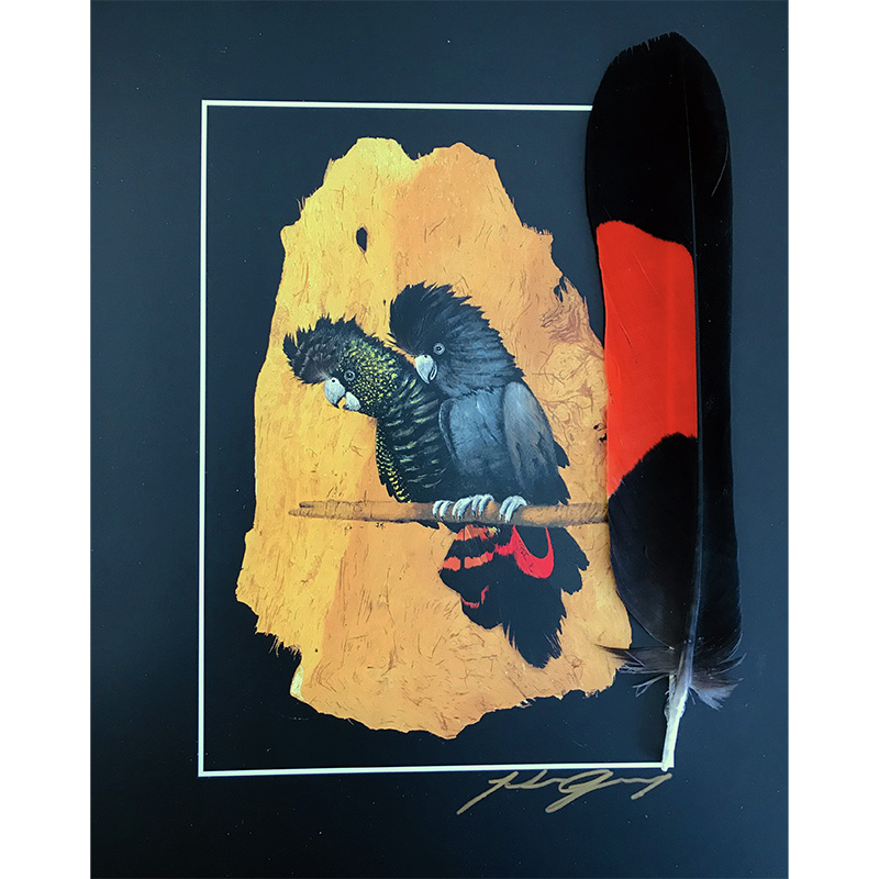 Red Tailed Black Cockatoo Print-Lrge Feather