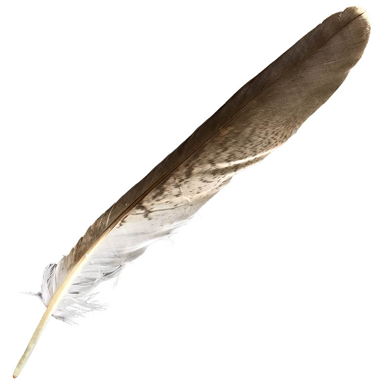 #6 (9 Matching) Whistling Kite Tail Feather