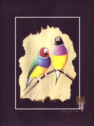 Gouldian Finches Print & Native Feather & Signed