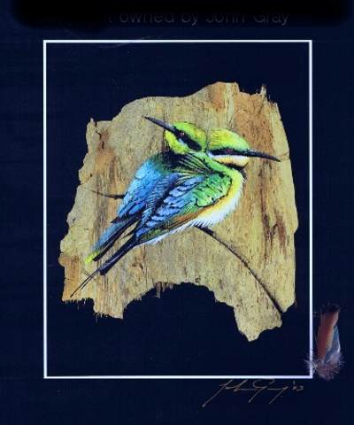 Rainbow Bee Eater Print & Native Feather & Signed