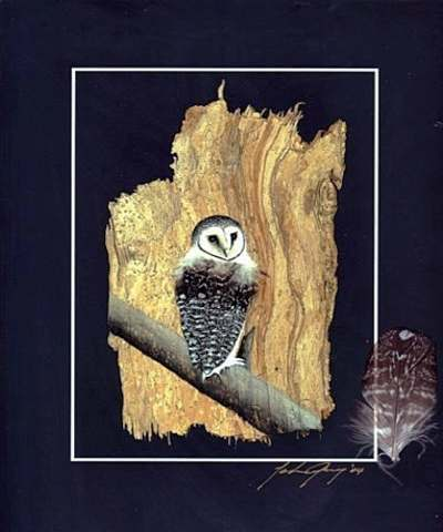Lesser Sooty Owl Print & Native Feather & Signed