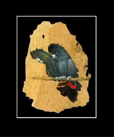 Red Tailed Black Cockatoo Print
