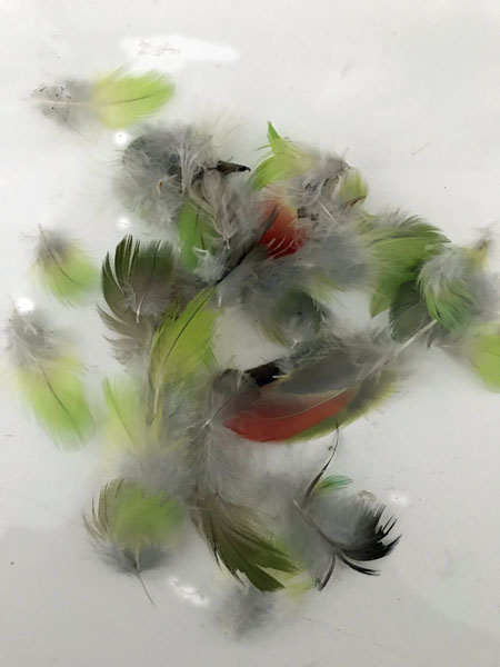 Red Winged Native Bird Feathers