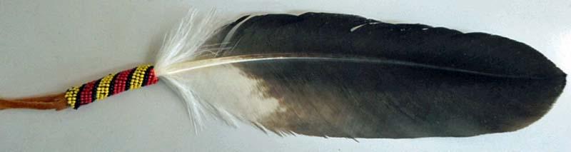 Australian Bird Feathers